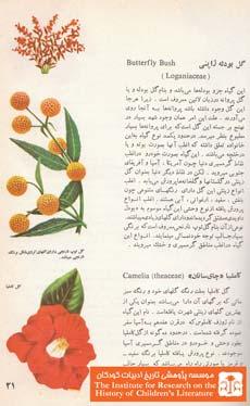 گلهای زینتی (۲۱)