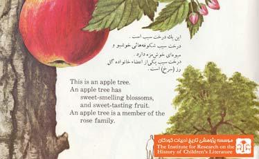 درخت چیست؟ (۱۸)
