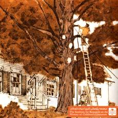 تنها درخت خانه(۶)