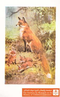 توبه روباه(۱۵)